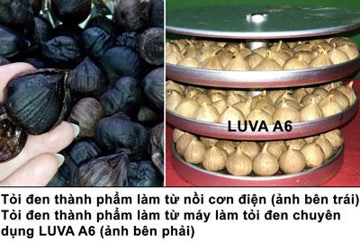 so sánh thành phẩm - Cách sử dụng máy làm tỏi đen Nhật Bản LUVA A6