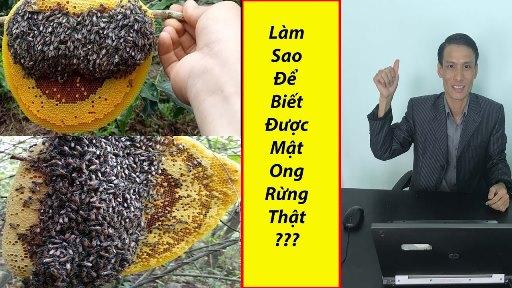 Cách kiểm tra mật ong rừng thật hay giả. Bạn đã biết chưa - Cách kiểm tra mật ong rừng thật hay giả. Bạn đã biết chưa?