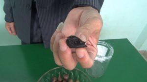 Review lọ tỏi đen cô đơn Viaicom xuất khẩu loại 1 để kiểm tra chất lượng xem như nào Xem thêm ngay 300x169 - Review lọ tỏi đen cô đơn Viaicom xuất khẩu loại 1 để kiểm tra chất lượng xem như nào- Xem thêm ngay!