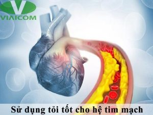 Sử dụng tỏi tốt cho hệ tim mạch