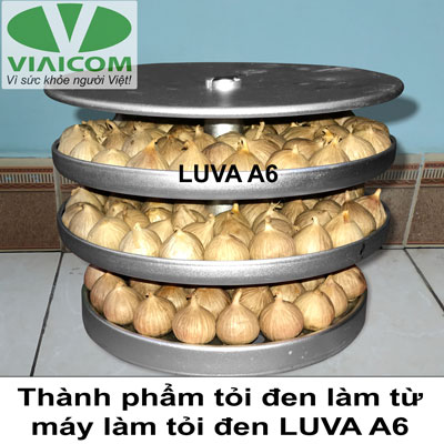 Cách sử dụng máy làm tỏi đen LUVA A6