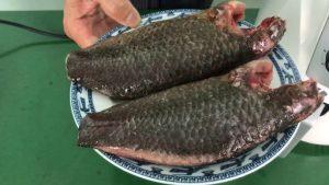 Thử nướng 500g cá rô lớn vĩ đại bằng nồi chiên nướng không dầu viaicom V30 và cái kết. Xem ngay 300x169 - Thử nướng 500g cá rô lớn vĩ đại bằng nồi chiên nướng không dầu viaicom V30 và cái kết. Xem ngay!