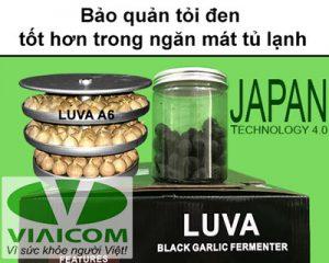 bảo quản tỏi đen 300x240 - bảo-quản-tỏi-đen