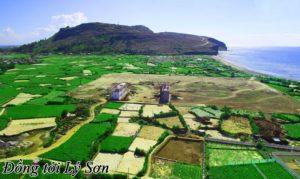 Cánh đồng tỏi trên đảo Lý Sơn