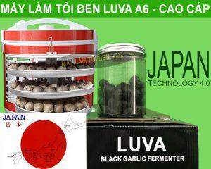 khay tỏilọ tỏimáy a6 300x240 - công dụng của tỏi đen có tác dụng với sức khỏe thật là kỳ diệu.