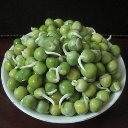 mầm đậu hà lan - 3 loại rau củ mọc mầm lại chứa hàm lượng dinh dưỡng giúp trẻ cao vượt trội