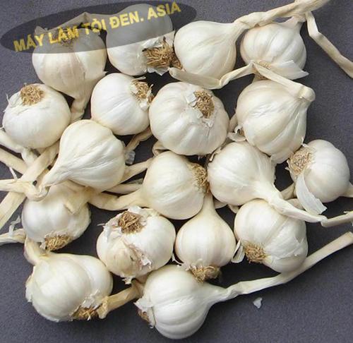 mua tỏi Lý Sơn