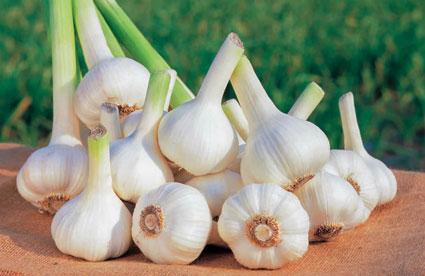 """tỏi thumb - Những thực phẩm """"nuôi dưỡng"""" cholesterol tốt"""