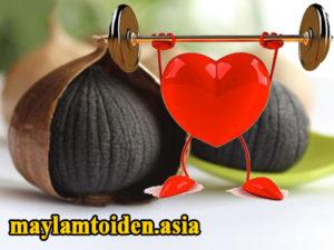 Tỏi đen phòng chống bệnh tim mạch