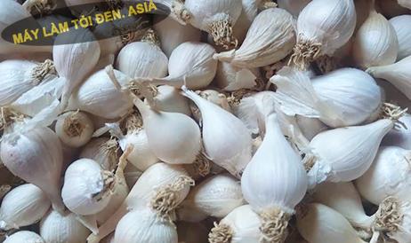 Tỏi Ninh Thuận